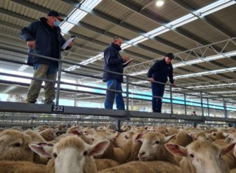 AWN Expands Livestock Operations Across Wimmera District and Tasmania