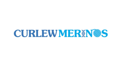 Curlew Merinos